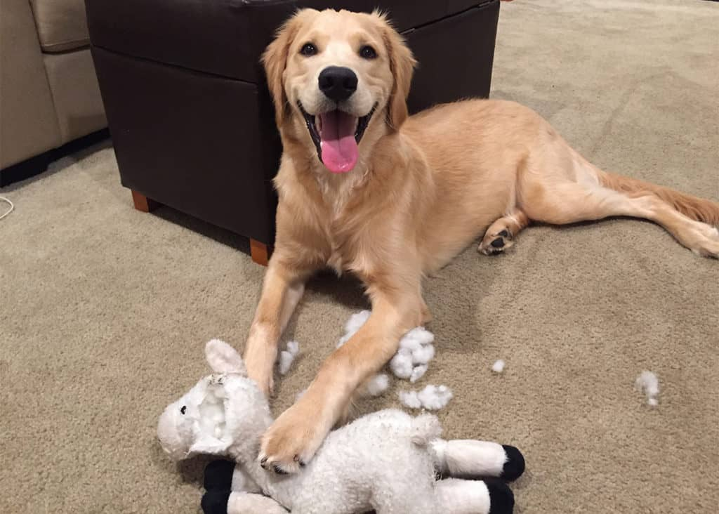 dog with plush toy
