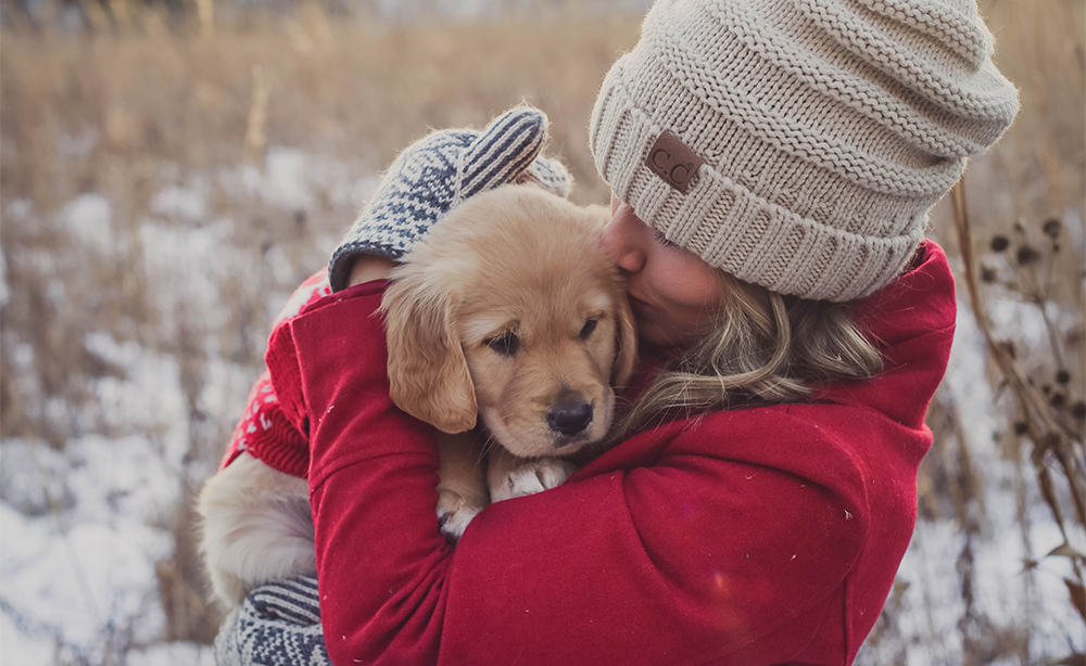 golden retriever puppy bundled up