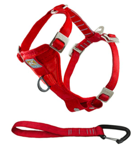 golden retriever puppy car harness