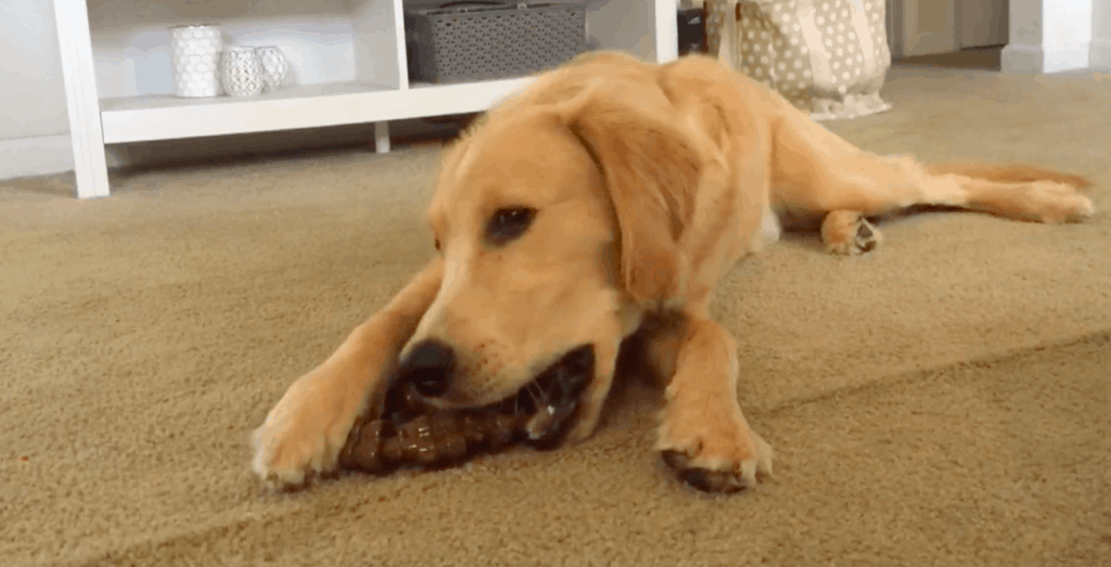 indestructible chew toy