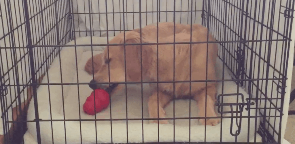 crate training with chew toys