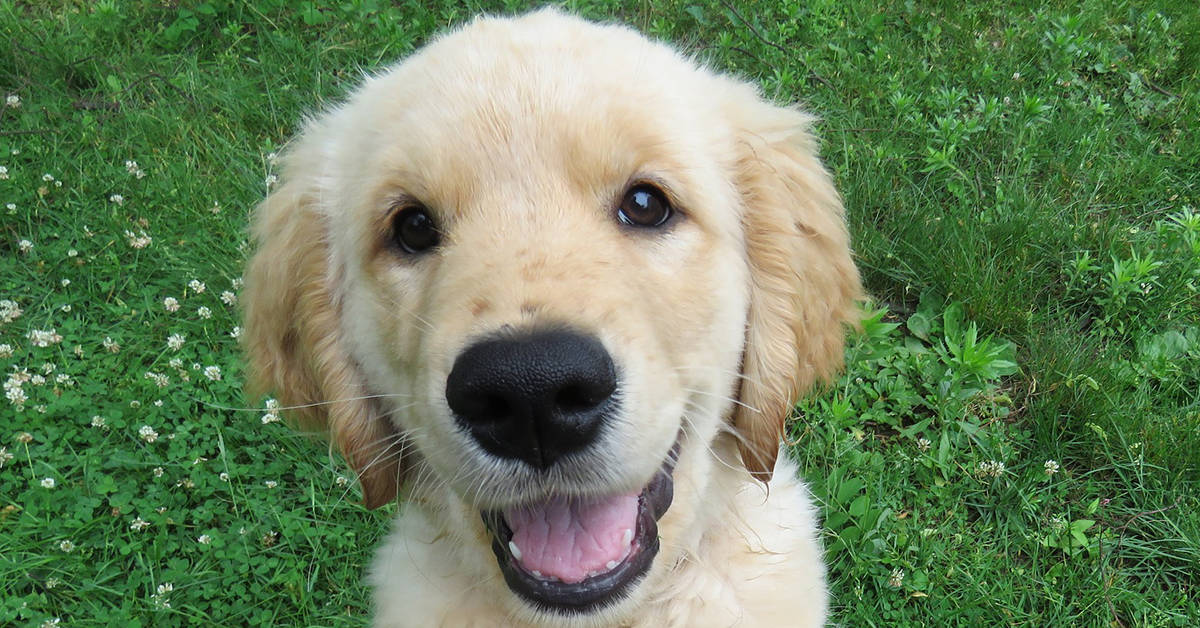 puppy training schedule
