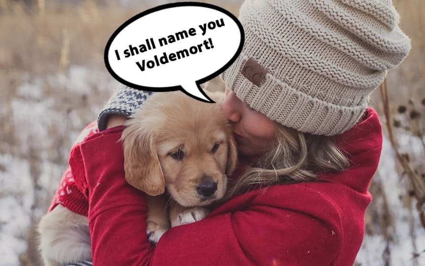 golden retriever puppy names