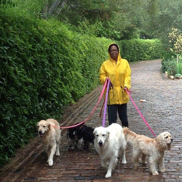 oprah winfrey golden retrievers