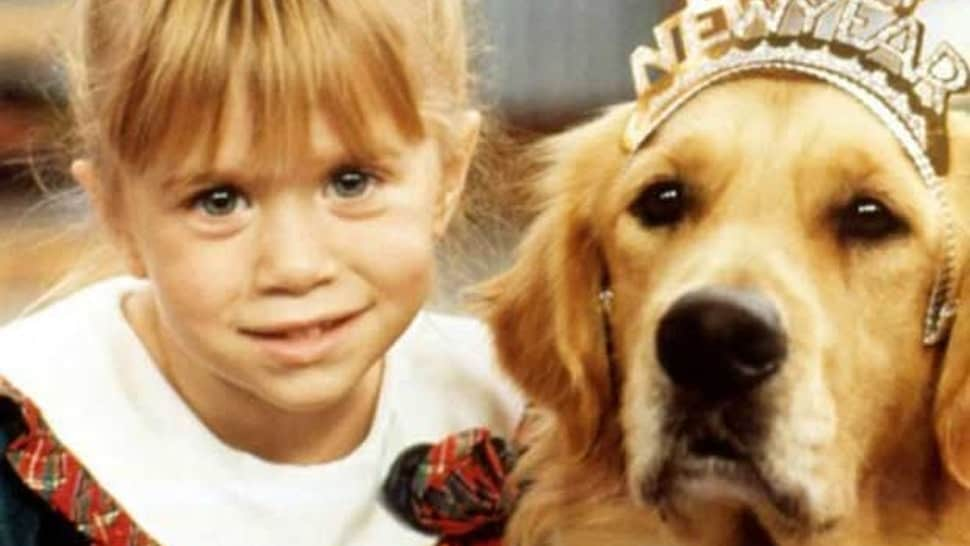 comet the golden retriever from full house