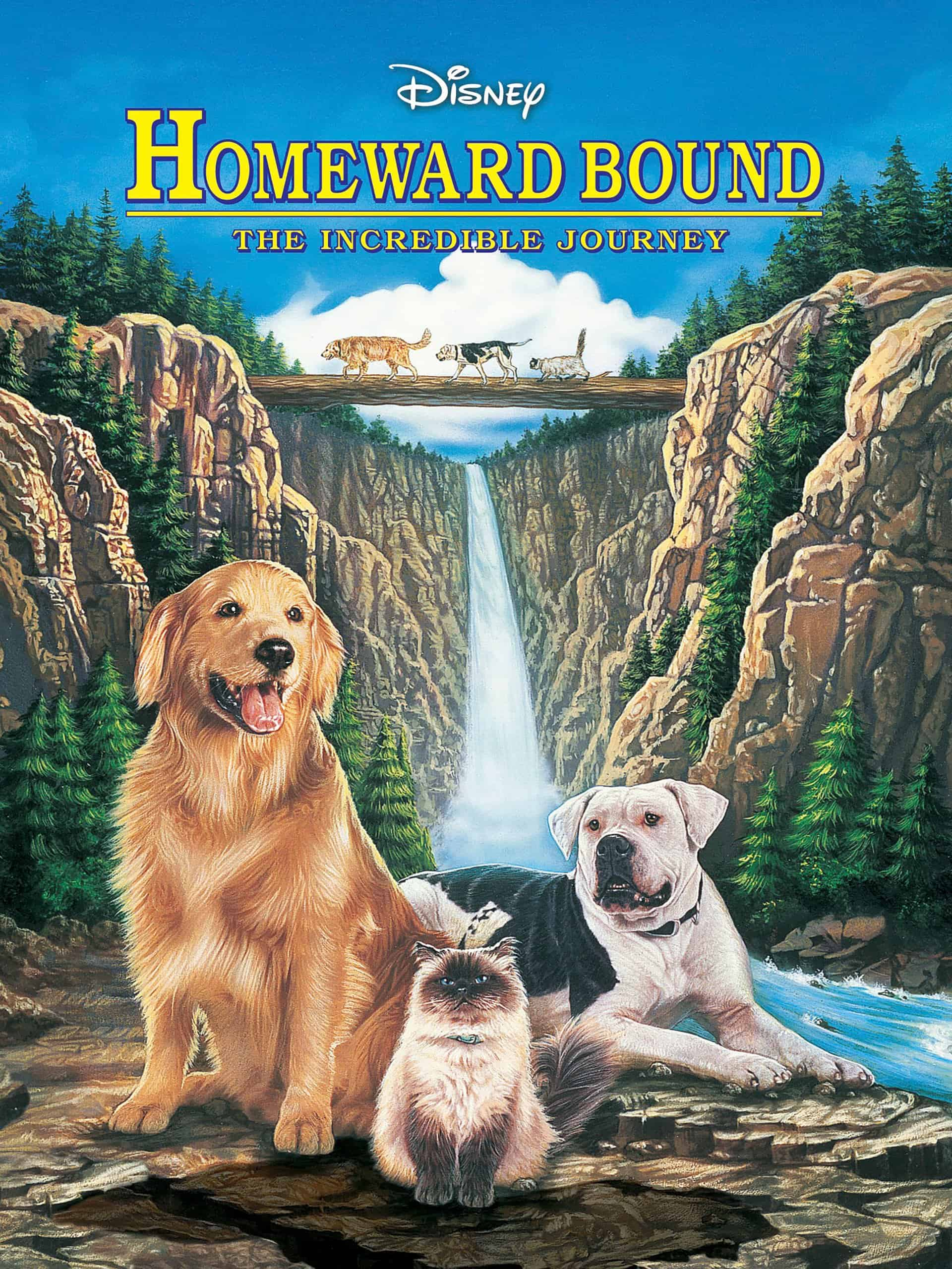 shadow golden retriever from homeward bound