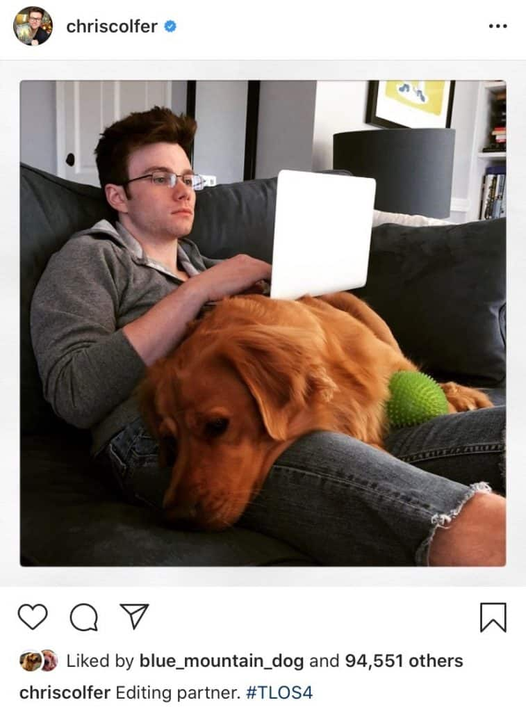 chris colfer golden retriever cooper