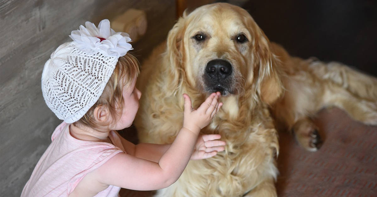 golden retrievers good with kids