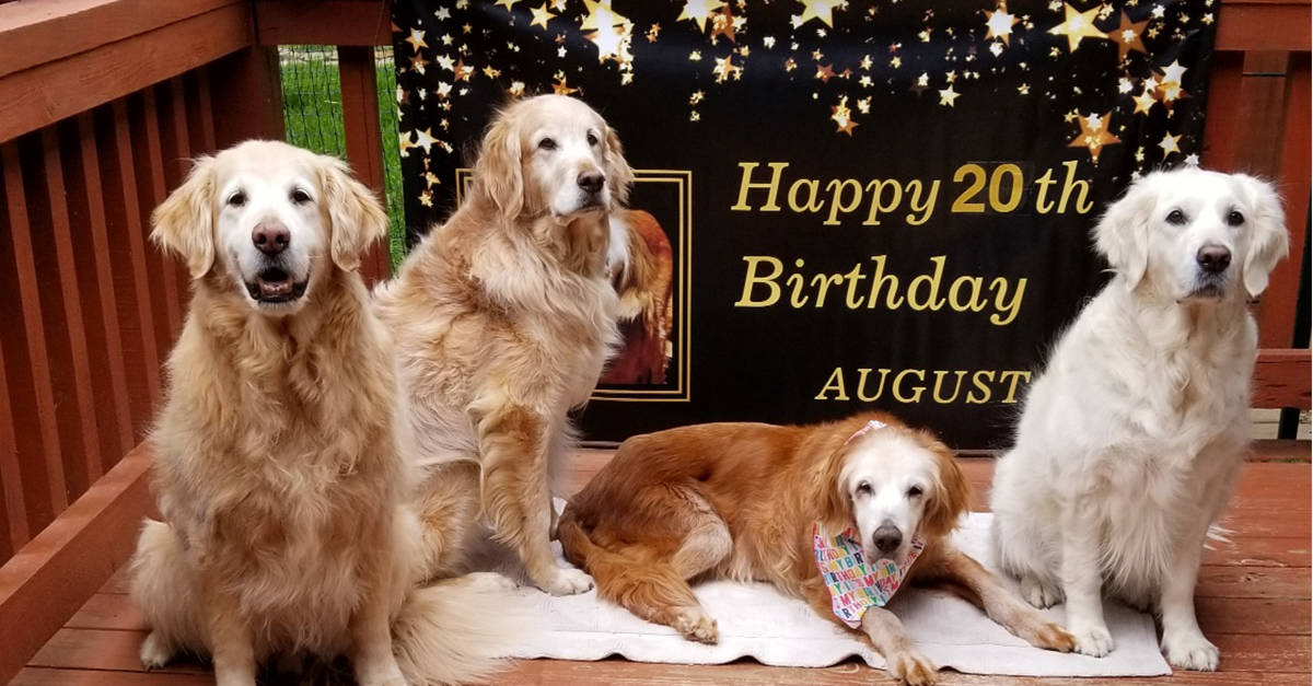 oldest golden retriever