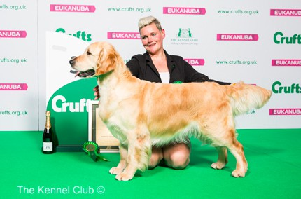 crufts english golden retriever winner