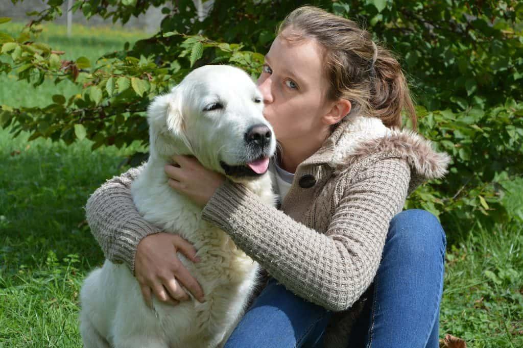 golden retriever as a service dog