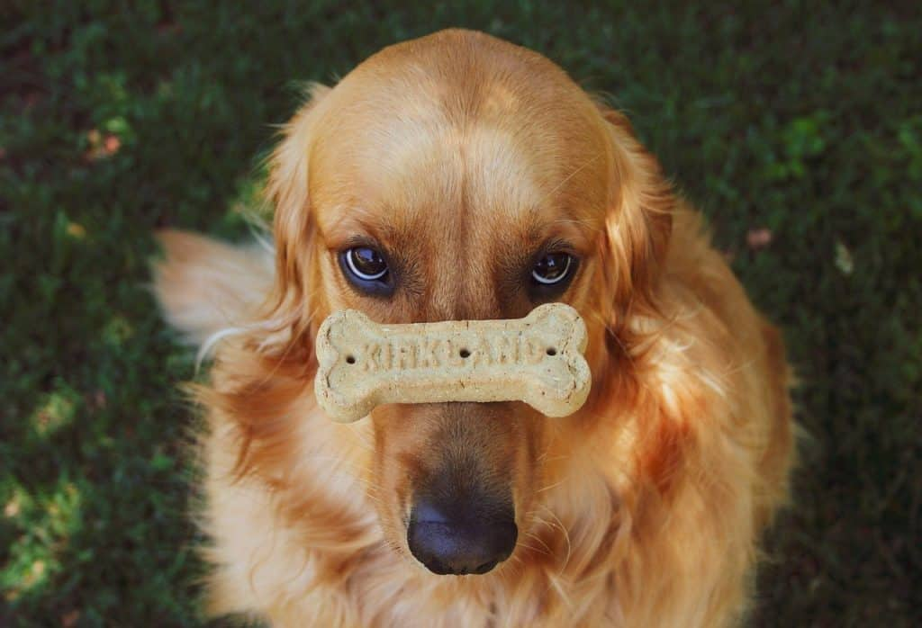 golden retrievers are good dogs because they're easy to train