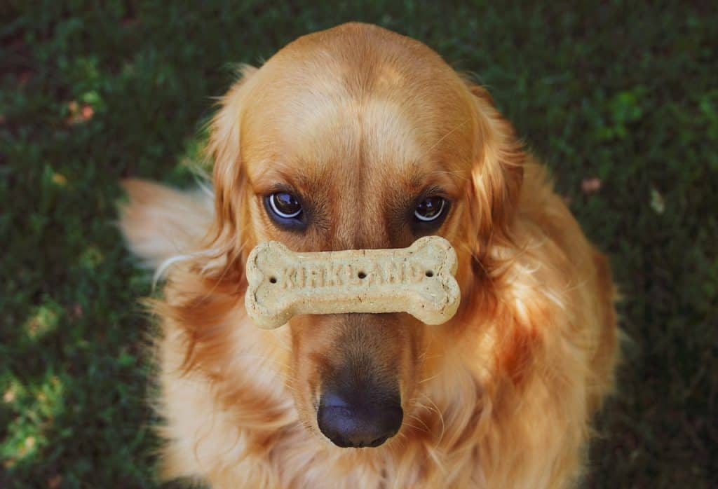 best products for golden retrievers
