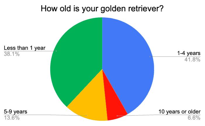 golden retriever age