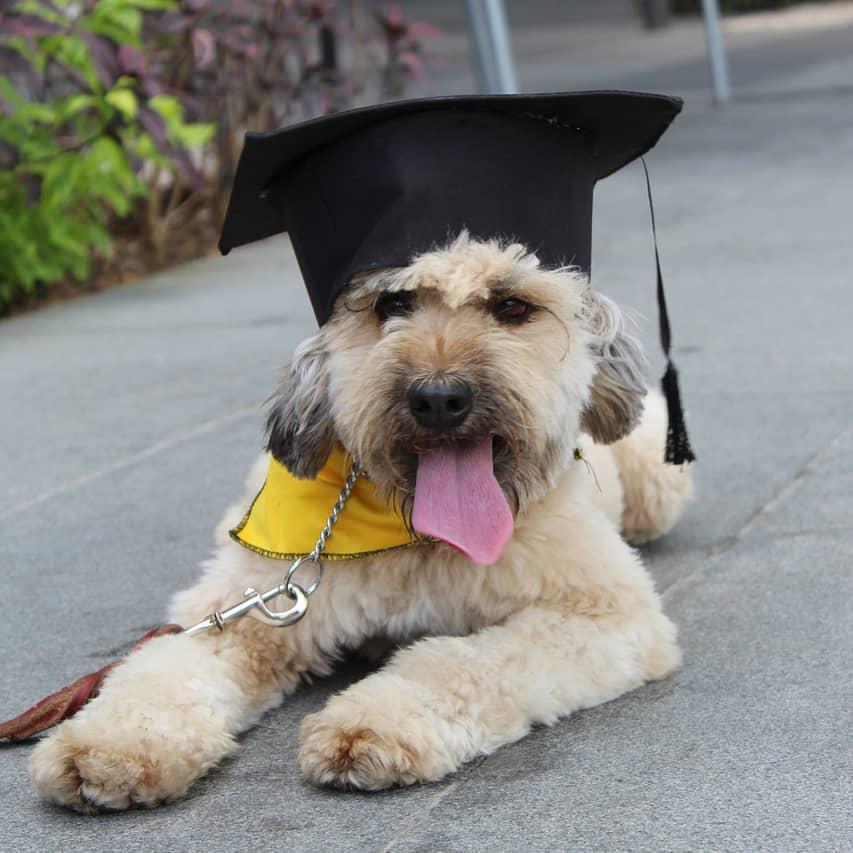 spiritdog puppy training