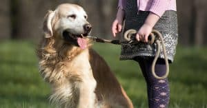 spiritdog training review